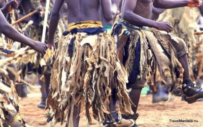 Krijgers dansen weer op Zambia's Nc'Wala Ceremonie.