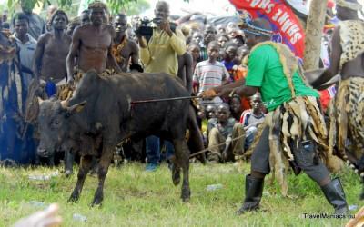 De krijgers doden een stier op Zambia's Nc'Wala Ceremonie.