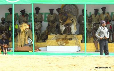 De Koning in leeuwenvel op Zambia's Nc'Wala Ceremonie.
