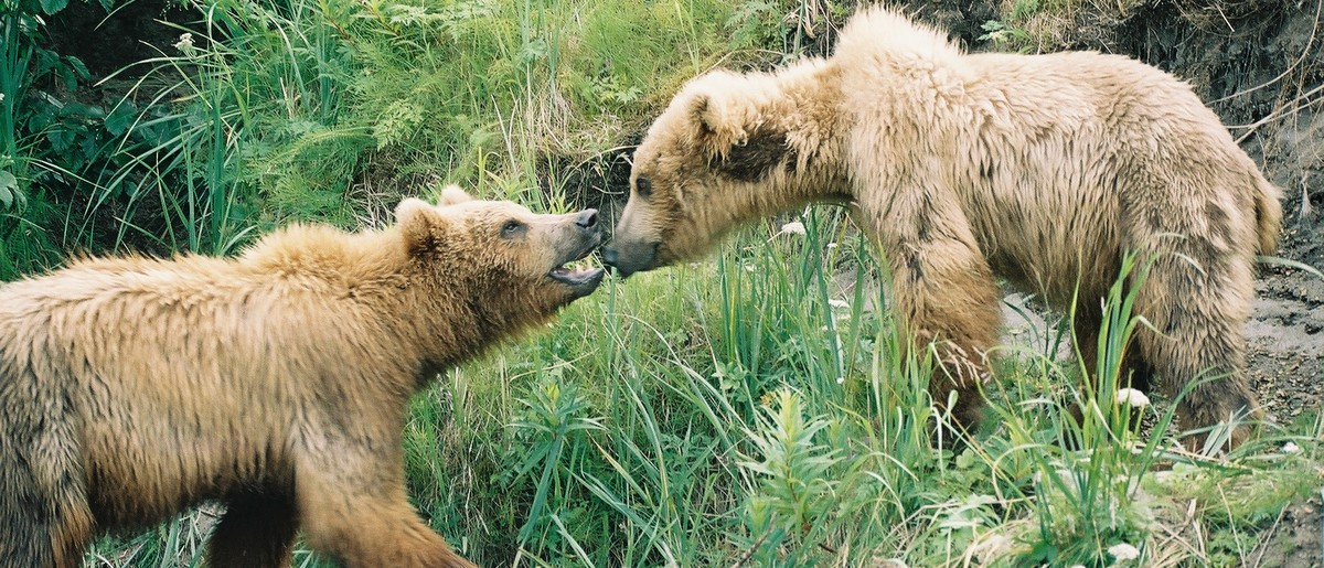 Permalink to:Alaska