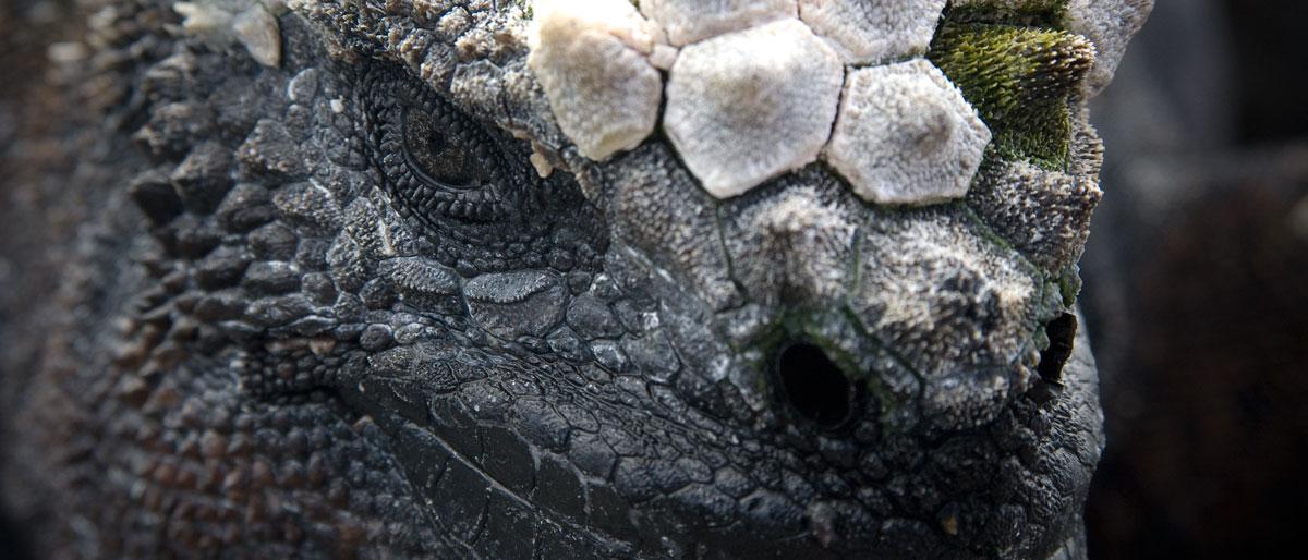 Permalink to:Galápagos eilanden