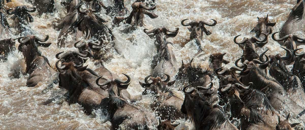 Permalink to:Kenia