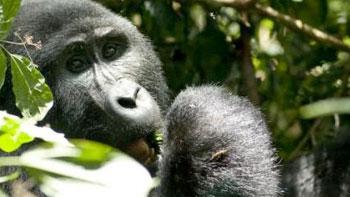 Permalink to:Ontmoeting in Oeganda