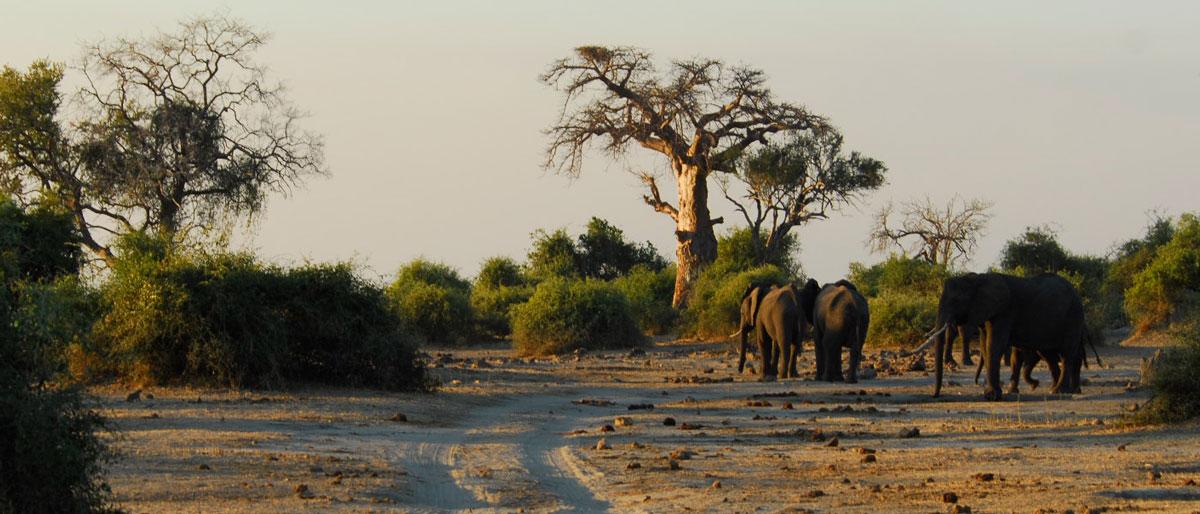 Permalink to:Botswana